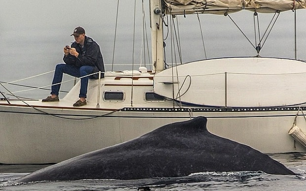 Man Misses Hump-Back Whale Sighting because he was Glued to his Cell phone